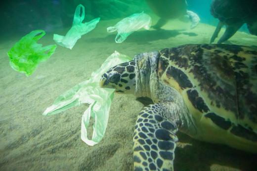 Marine Life Dying
