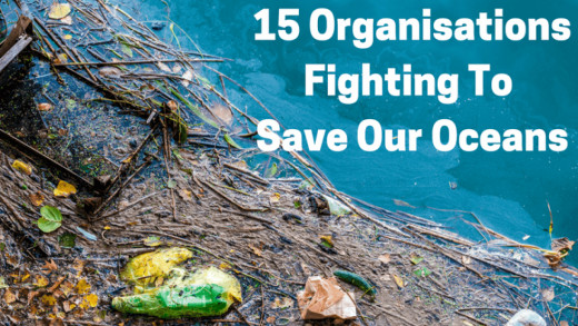 Organizations To Save Our Oceans