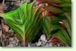 Succulent Casting