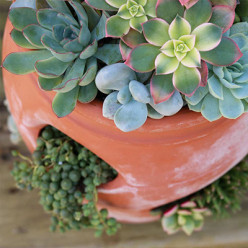 Pour Succulents Properly - Tips & Tricks