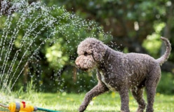 Dogs and Heat: 10 Refreshing Tips to Enjoy the Summer
