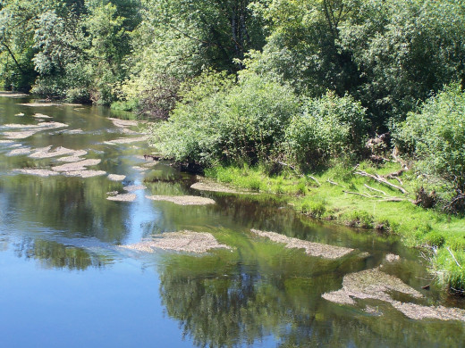 The flow of your writing, hopefully, is like this tranquil river....toss in some rapids and you've got it.