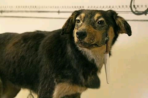 One of the Pavlovian Dogs