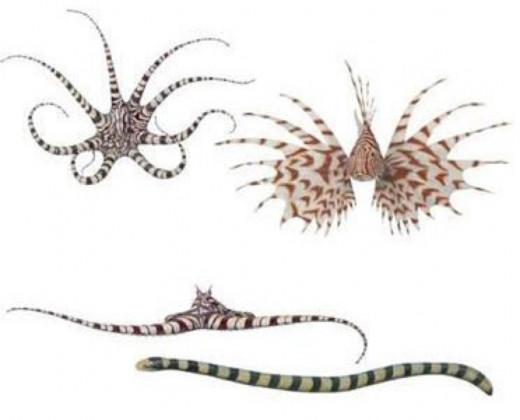 Mimic Octopus Shapes