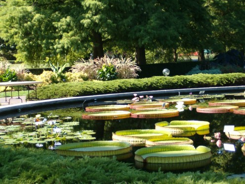 One of the water gardens, with huge lilly pads. Breathtakingly beautiful