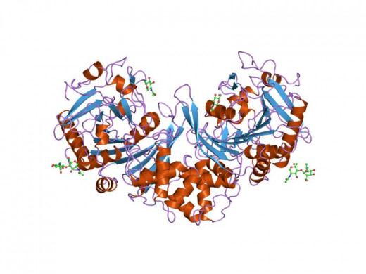 Graphic rendition of proteins