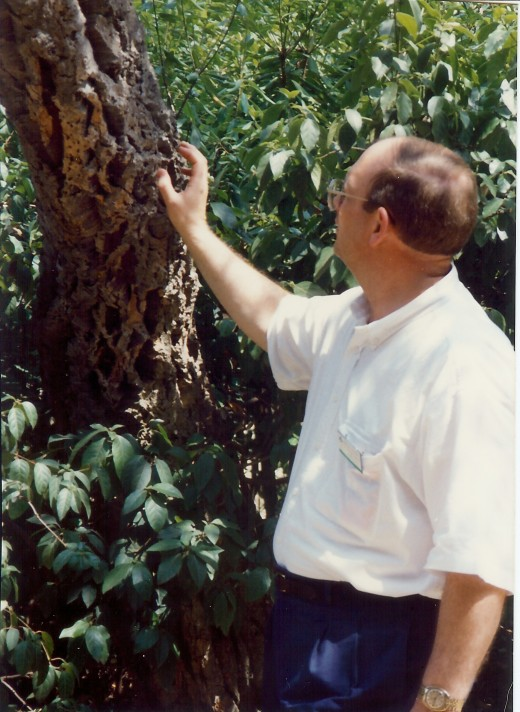 Hubby noticing a tree whose bark is used for cork