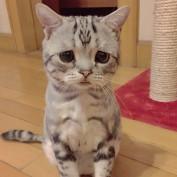 catfar mee profile image