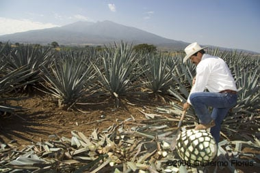 Agave Fields.   http://www.flickr.com/photos/memoflores/143543250/