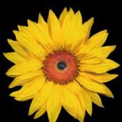 Jean W profile image