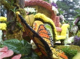 The main attraction of Panagbenga Festival is the float parade . Different flowers are used to adorn floats ala Rose Parade of the US.