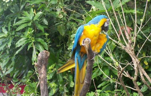 Bird in Bali Safari Park
