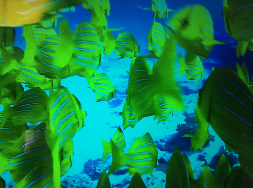 Fish will one day return to the oceans once the coral reefs are restored in the future by God's Kingdom.