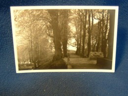 "A postcard, not from my collection, of the supposed ""Hamlet's Grave"""