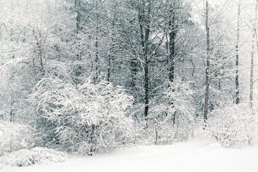 Sticky Snow Creates Winter Beauty