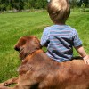 Choosing a Dog for a Family with Children