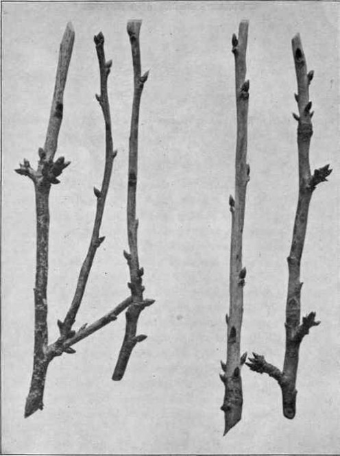 Use branches like these to make a splint