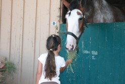 The kids were as starstruck as I was, the horses were charming and accepted their food offering.