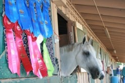 After each event, spectators are invited to visit the horses at their barn areas, you can see the results of their competitions hanging on their doors.