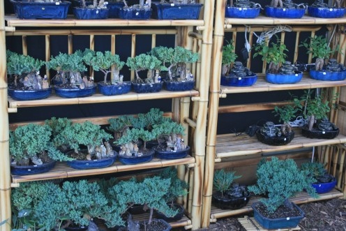 Beginning your collection or adding to it, you will find some lovely Bonsai in this booth.