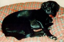 Happy Animal Rescue Story Told by Trudy the Dog