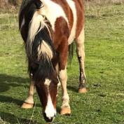 rainbow horse profile image