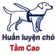 huanluyenchotamcao profile image