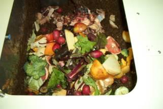 Feeding Organic Wastes