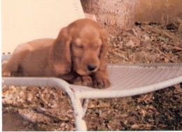 Bonzo, when we got him home at about six weeks.