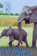 15 Fun Facts About Elephants