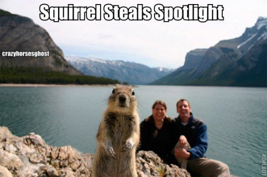 Don't try to take a photo when this fun loving squirrel is around because he loves to have his photo made.