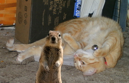 And when I run for President in 2012 I want to ban Cats from Squirrel's yards