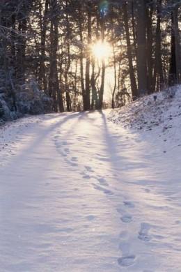 A Stroll Through Winter's Wonderland