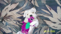 Good-bye My Pet (A good-by to our Lhasa Apso)
