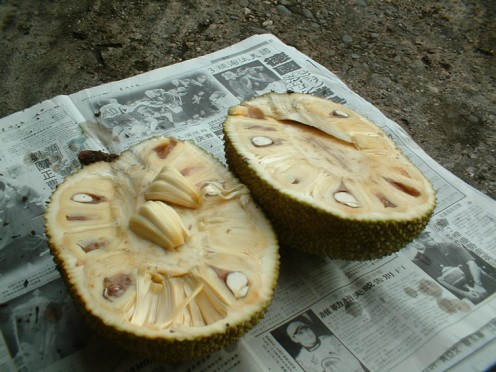 Cross-section of a Jackfruit