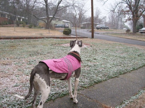Experiencing a rare snowfall in Alabama