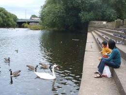 Feed ducks