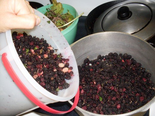 Sort the berries, taking out any sticks, leaves, and pink, unripe berries.