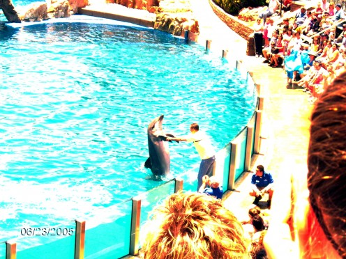 "One of the guests in the audience is shaking ""hands"" with a dolphin."