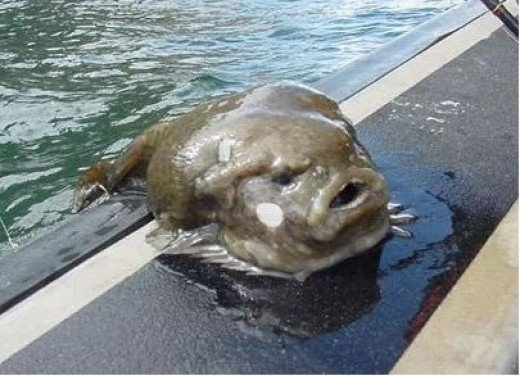 10. Lumpfish