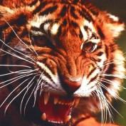 rajabilal profile image