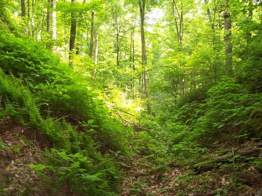 More Kentucky scenery