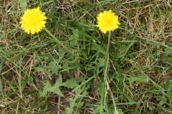 Weeds in My Garden   deedsphotos