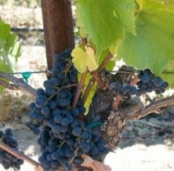 Self-Guided Day Tour of Wine Country In  Santa Barbara County, CA
