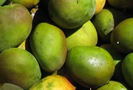 Ripe Green Mangos
