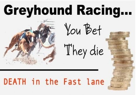 Many people informed about the cruelty of this racing resulted to declined in attendance and betting, forces operators to look for better alternatives and Philippines is their next target.