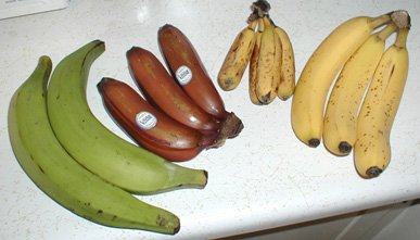 From left to right; Plantains, Red Banana, Dwarf Banana, Cavendish Banana