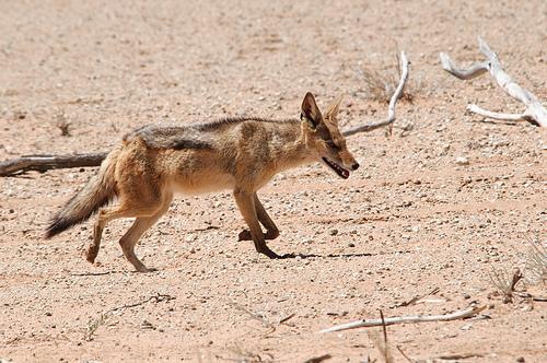 The Kalahari Game Reserve