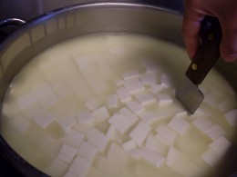 Cutting the curds into 1/2-inch strips.