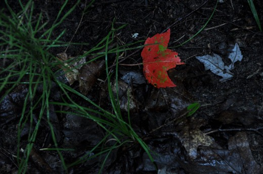 A red leaf brightens the black muck of the creek gulley.